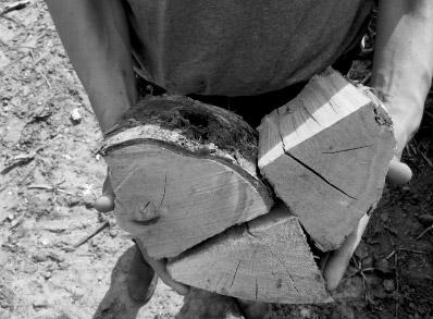 delamere logs sample logs