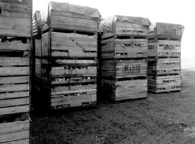 delamere logs seasoning the logs